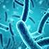 základnými druhmi baktérií
