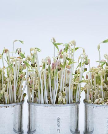 10 najlepších rastlín pre zen menopauzu a spôsoby, ako ich využiť